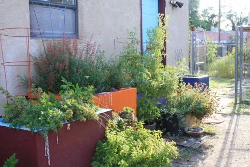Good To Grow, Liza's photos, Liza's August Garden