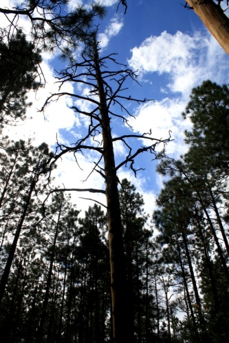 Good To Grow, Liza's photos, Jemez hike