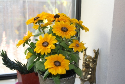 Good To Grow, Liza's photos, Rudbeckia flowers