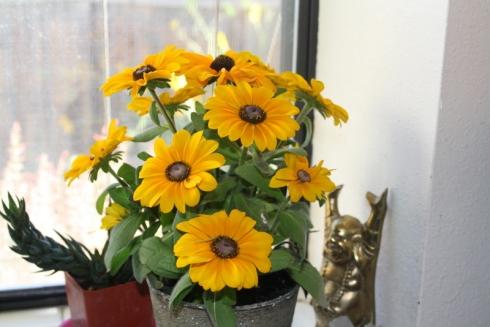 Good To Grow, Liza's photos, Rudbeckia flowers