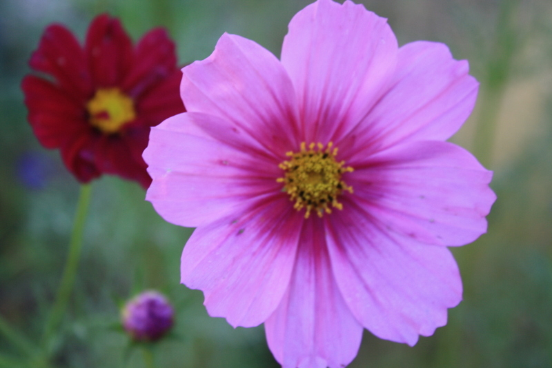 good to grow lizau0027s photos pretty blooms - Pretty Plants