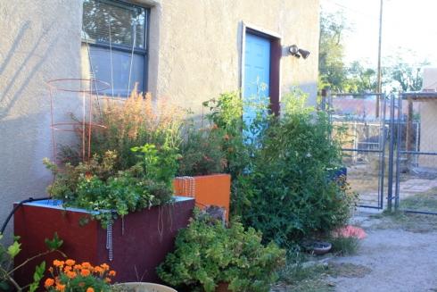 Good To Grow, Liza's photos, October garden