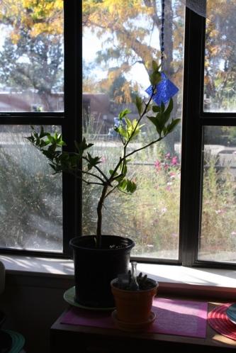 Good To Grow, Liza's photos, Liza's plants