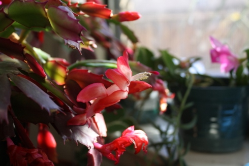 Good To Grow, Liza's photos, Why I love indoor plants