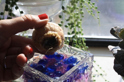 Good To Grow, Liza's photos, Low-cost nature gifts