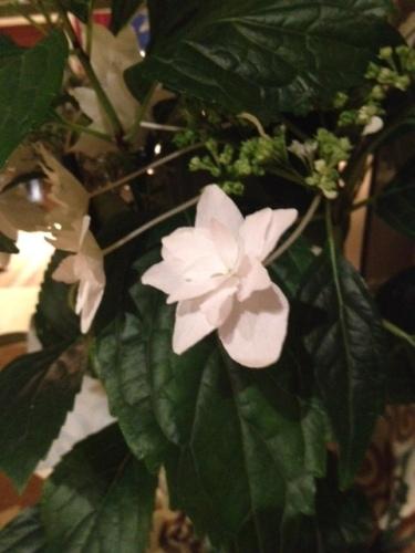 Good To Grow, Liza's photos, plant identification