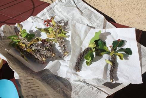 Good To Grow, Liza's photos, smuggled plant cuttings