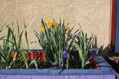Good To Grow, Liza's photos, a bit of spring