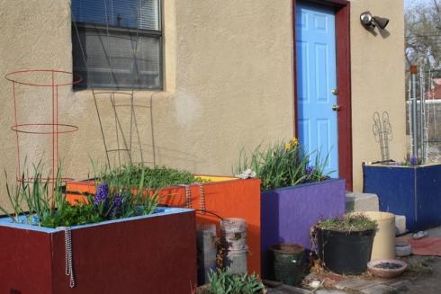 Good To Grow, Liza's photos, 2015 Backdoor Container Garden Oasis
