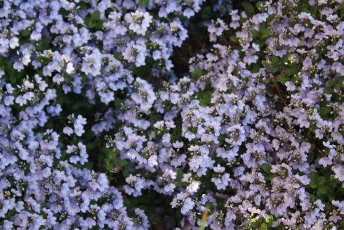 Good To Grow, Liza's photos, purple flowers