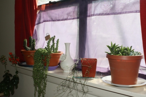Good To Grow, Liza's photos, East Windowsill Crew