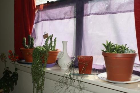 Good To Grow, Liza's photos, East Windowsill Crew