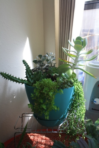Good To Grow, Liza's photos, newish succulent bowl
