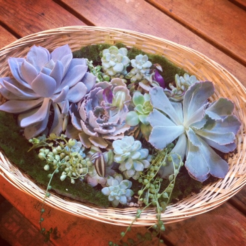 Good To Grow, Liza's photos, new succulent bowl