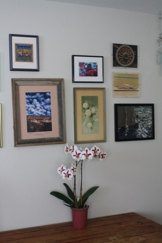 Good To Grow, Liza's photos, Orchid from Dottie