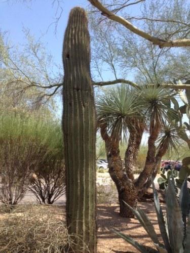 Good To Grow, Liza's photos, Desert Landscape