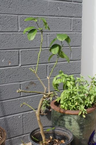 Good To Grow, Liza's photos, Liza's new garden