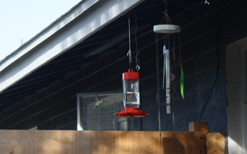 Good To Grow, Liza's photos, cute little hummingbirds