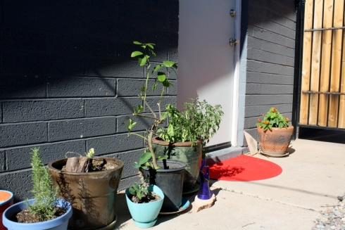 Good To Grow, Liza's photos, backdoor with an Ikea rug