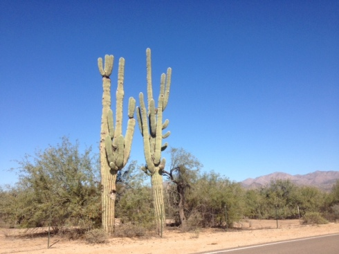Good To Grow, Liza's photos, desert landscape