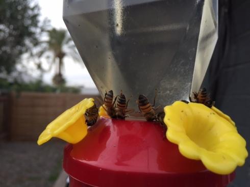 Good To Grow, Liza's photos, upsidedown bees