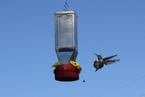 Good To Grow, Liza's photos, bee-free hummingbird feeder