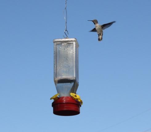 Good To Grow, Liza's photos, bee-free hummingbird feeder