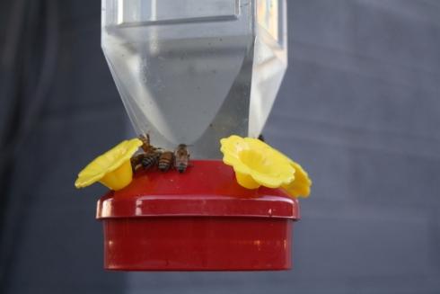 Good To Grow, Liza's photos, birds vs bees