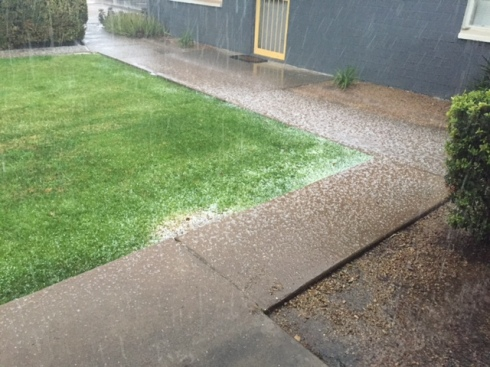 Good To Grow, Liza's photos, hail in Phoenix