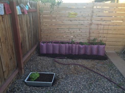 Good To Grow, Liza's photos, 2016 vegetable and herb garden