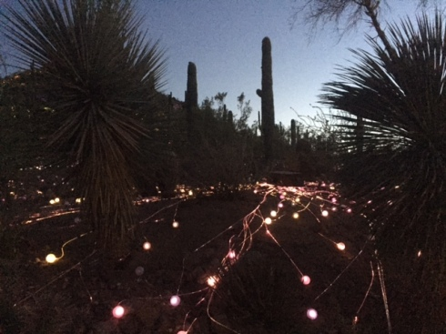 Good To Grow, Liza's photos, Desert Botanical Gardens light exhibit