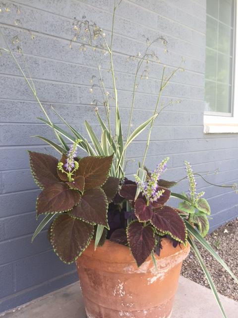 Good To Grow, Liza's photos, front door container garden