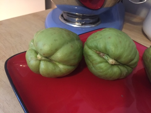Good To Grow, Liza's photos, chayote